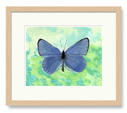 Butterflies Art Blue