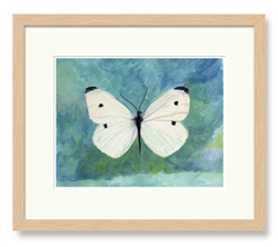 Butterflies Art White