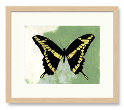 Butterflies Art Yellow & Black